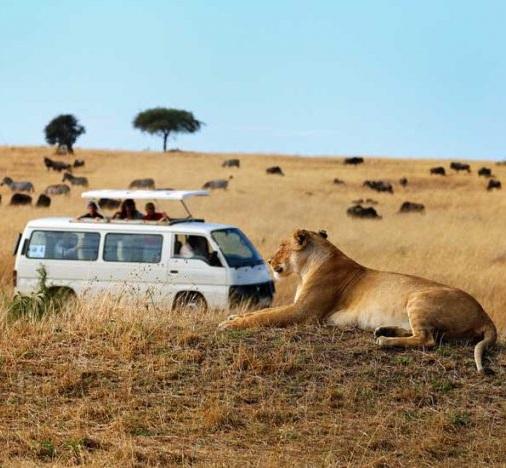 Amboseli Drive