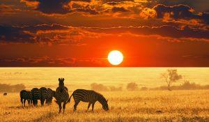 2 days 1 night masai mara camping safari