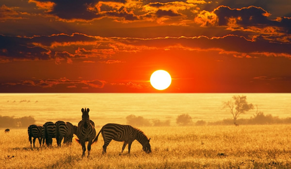 2 days 1 night masai mara camping safari