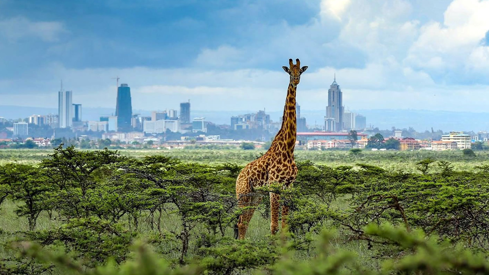 top 10 places to go in nairobi layover- nnp