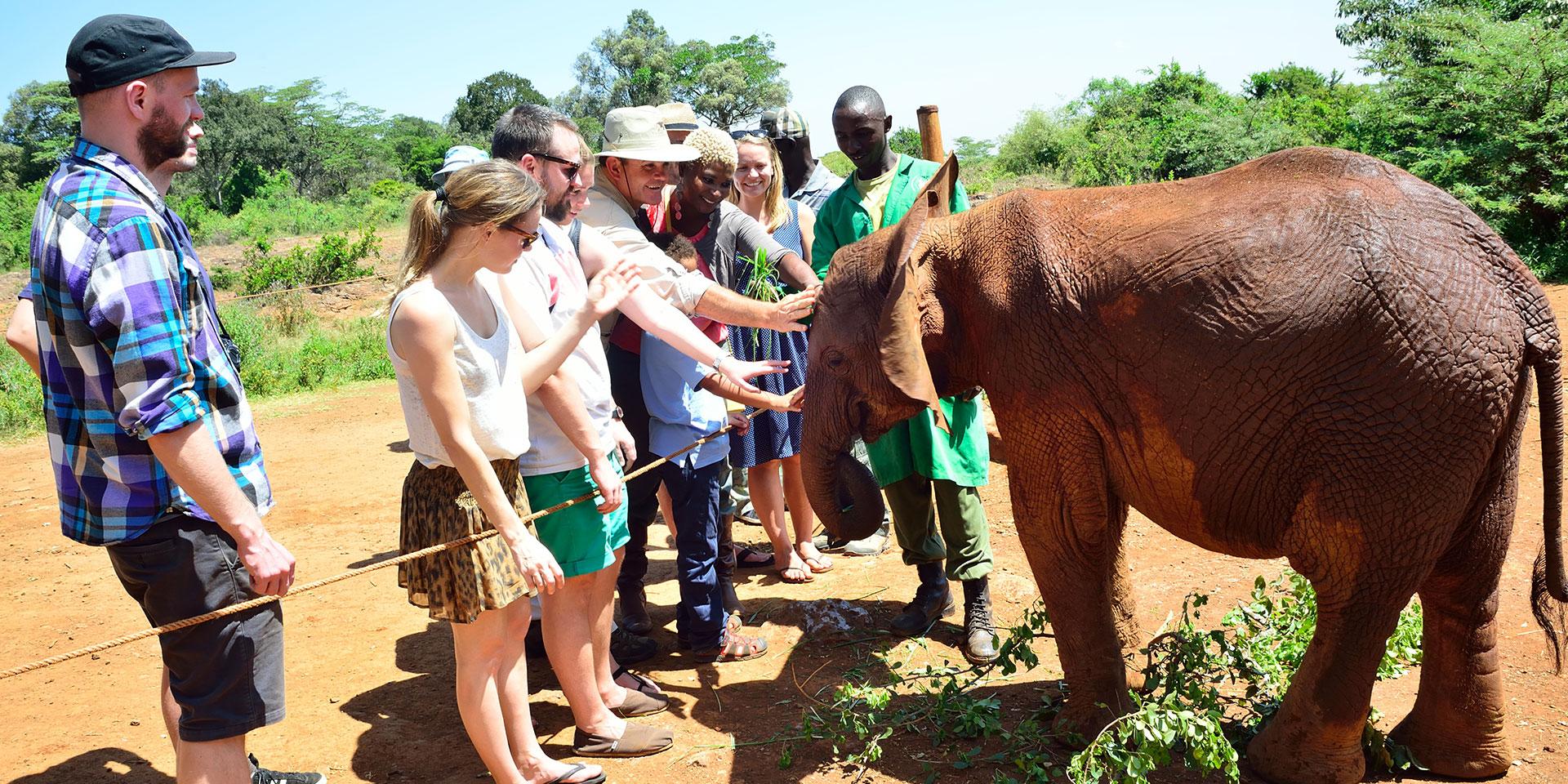nairobi_elephant_orphanage