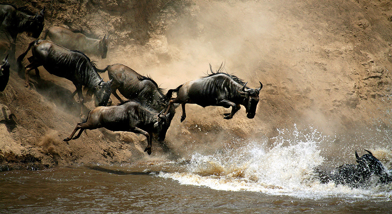 7 Days Masai Mara Wildebeest Migration Safari