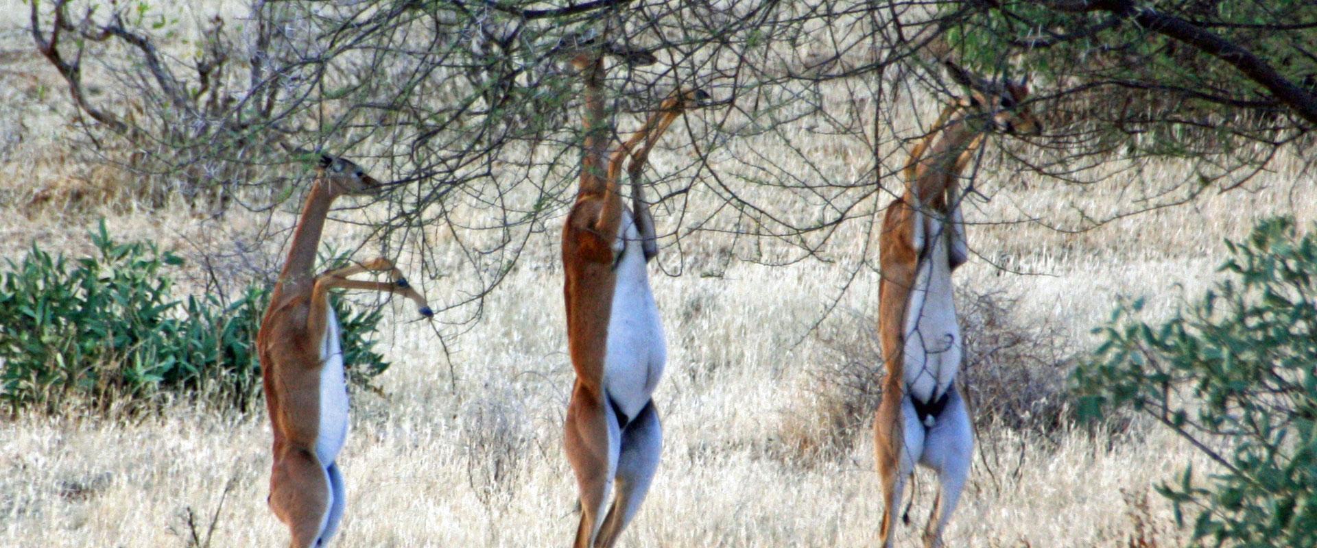samburu-game-reserve-banner