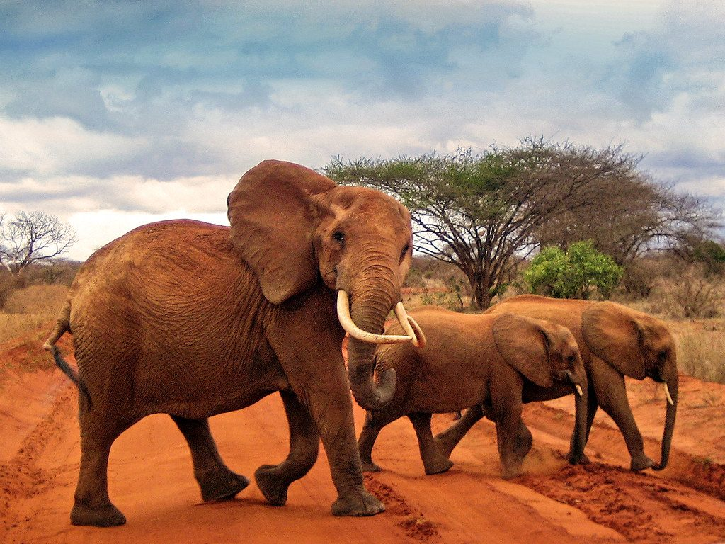 5 days tsavo west amboseli tsavo east safari