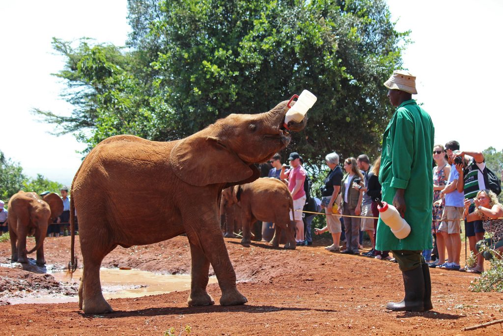 Nairobi Elephant Orphanage Day Tours