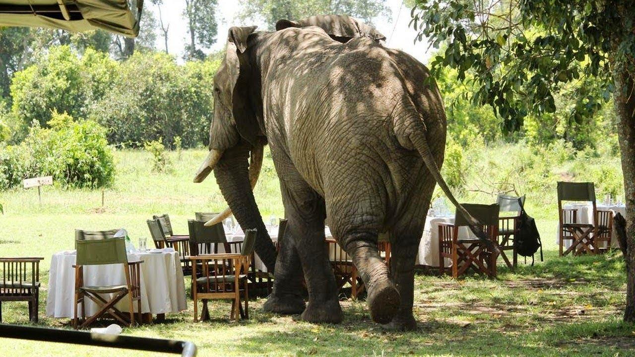 masai mara day trip