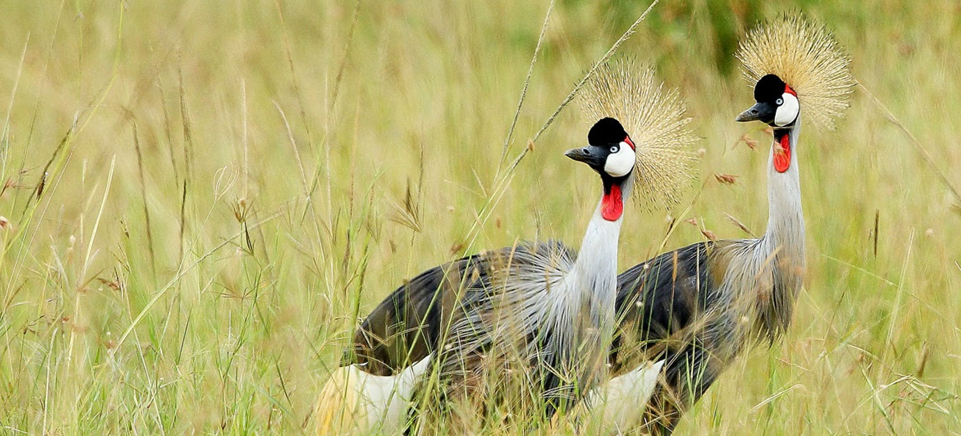 1 day birdwatching in nairobi national park