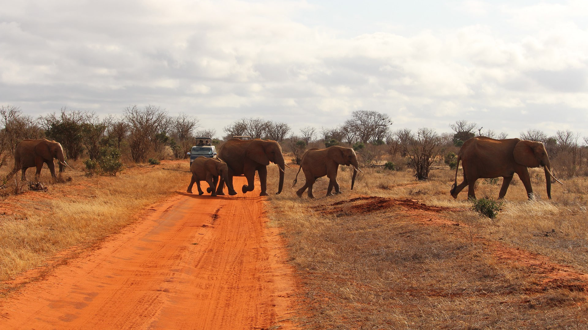 1-day-Safari-Tsavo-East-national-park